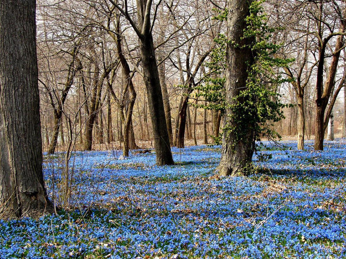 фотообои поздняя весна лес этому
