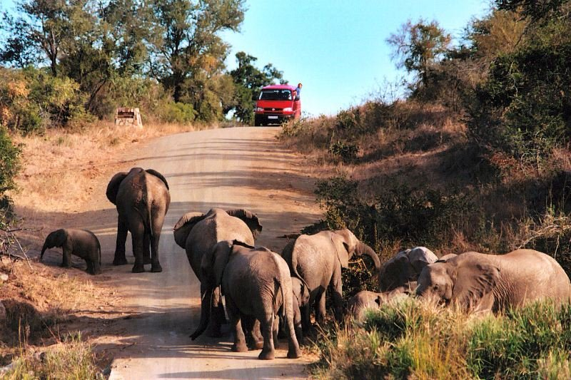 an analysis of wildlife and terrain of the kruger national park in south africa An analysis of wildlife and terrain of the kruger national park in south africa.