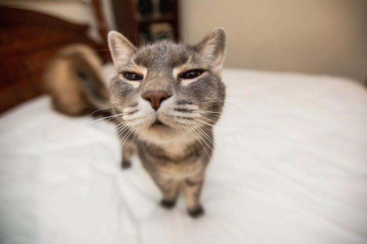 Поздравление для, картинка с прикольным котом