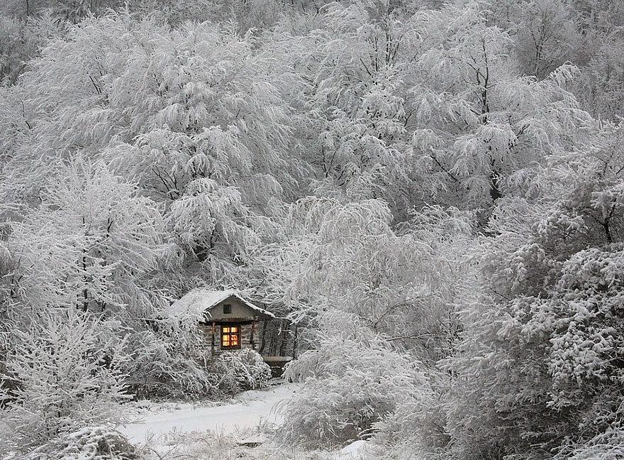 зимний сад обворожительный
