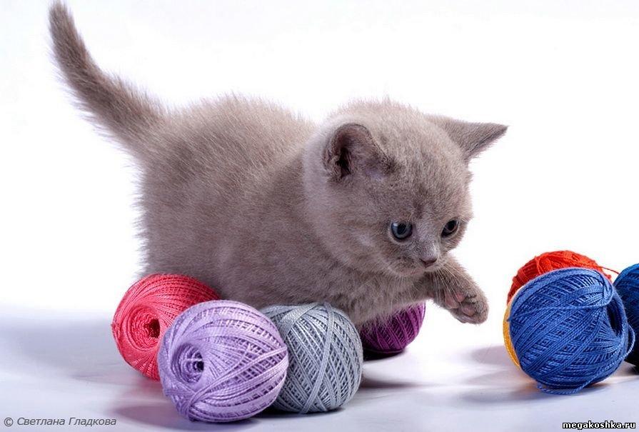 Картинки для детей кошка играет клубком