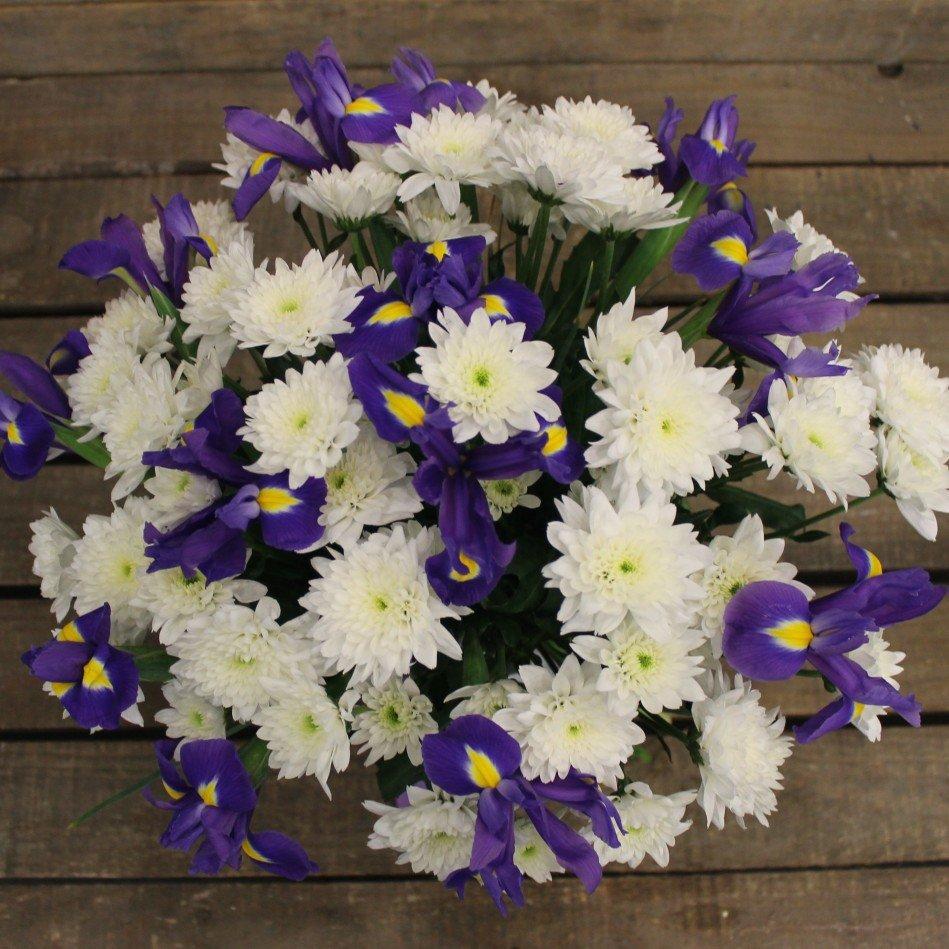 фото ирисов хризантемы