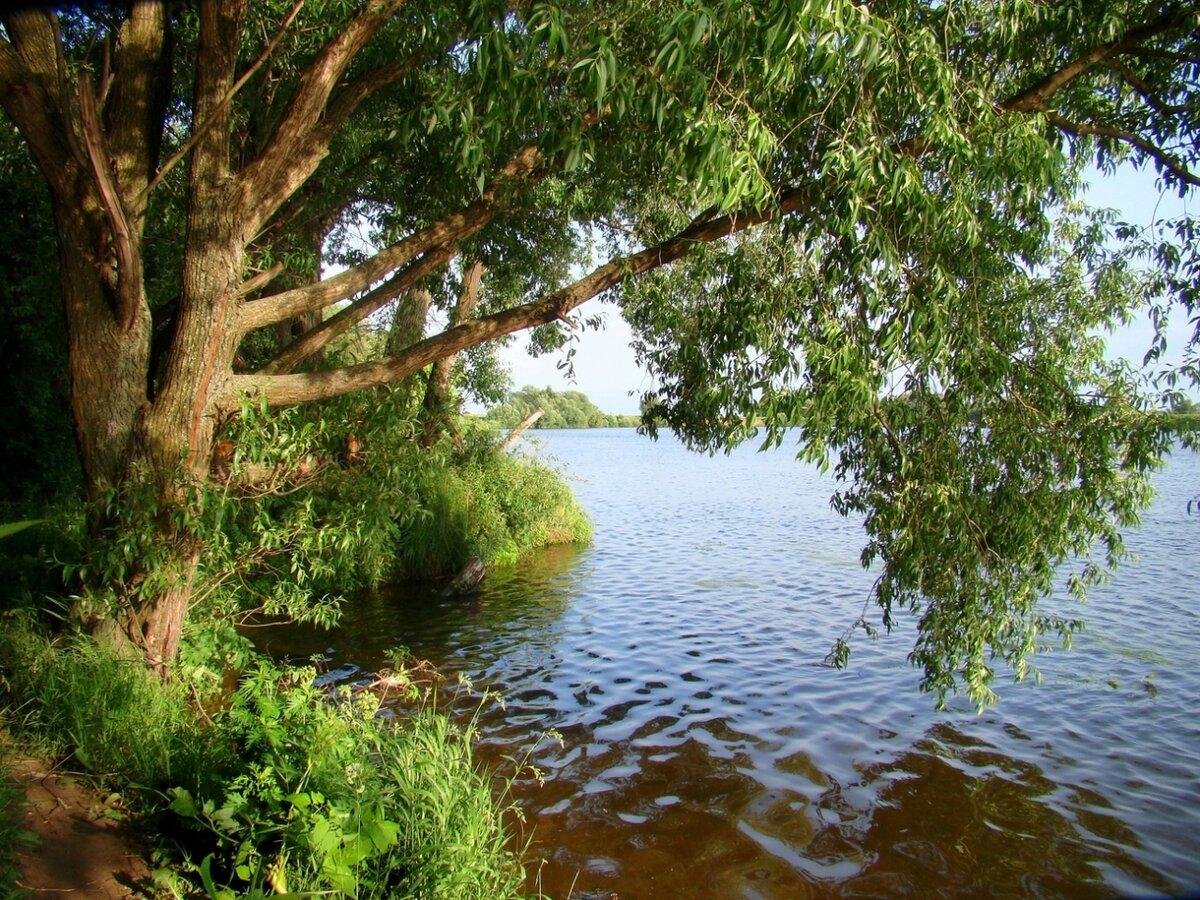 фото тополя на берегу реки действительно