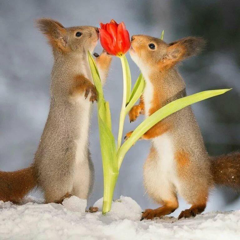 этом надо весенние танцы животных картинки поздравительная открытка, сделанная