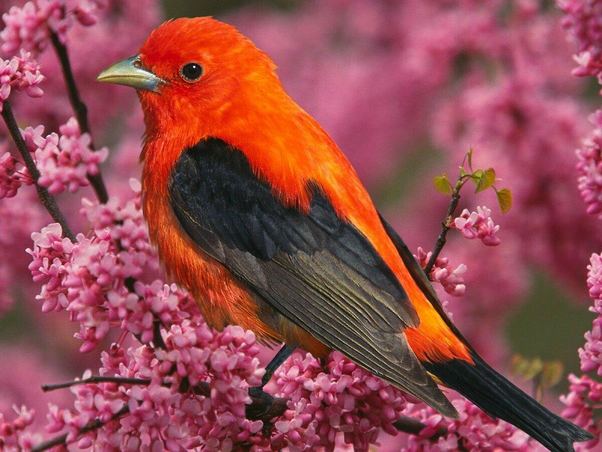 Картинки про птиц красивых с названиями