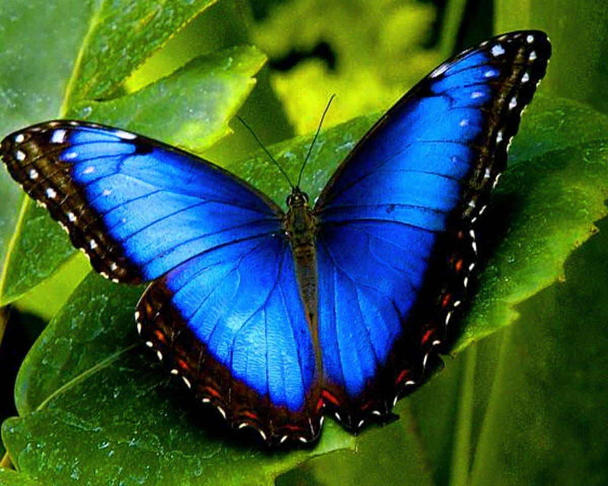 Необычные картинки с бабочками
