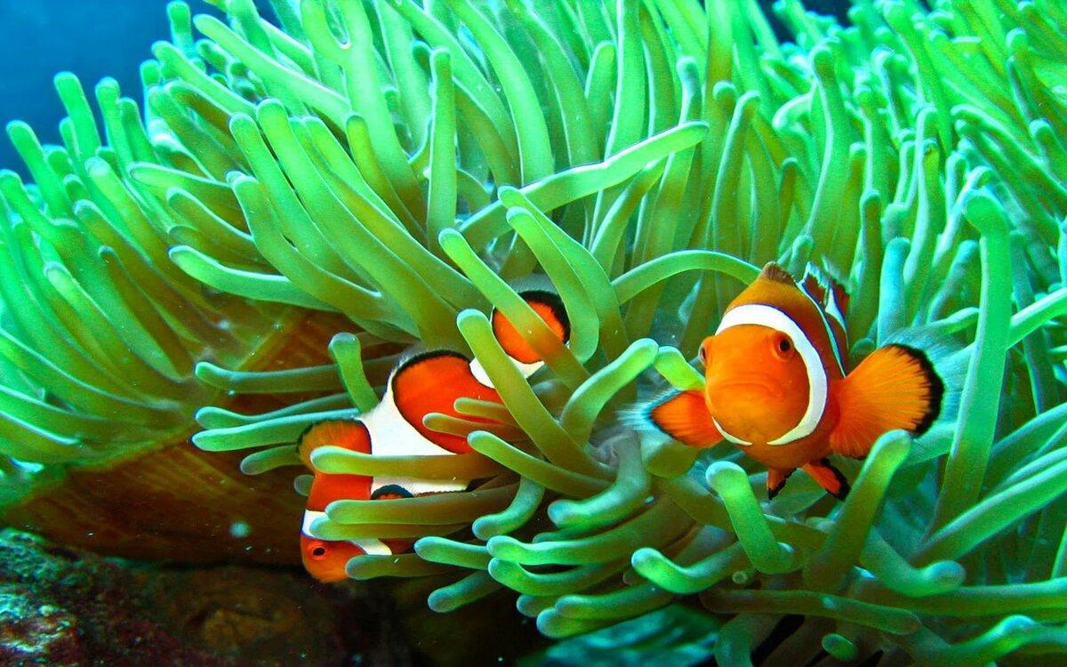 цветы картинки с рыбками есть