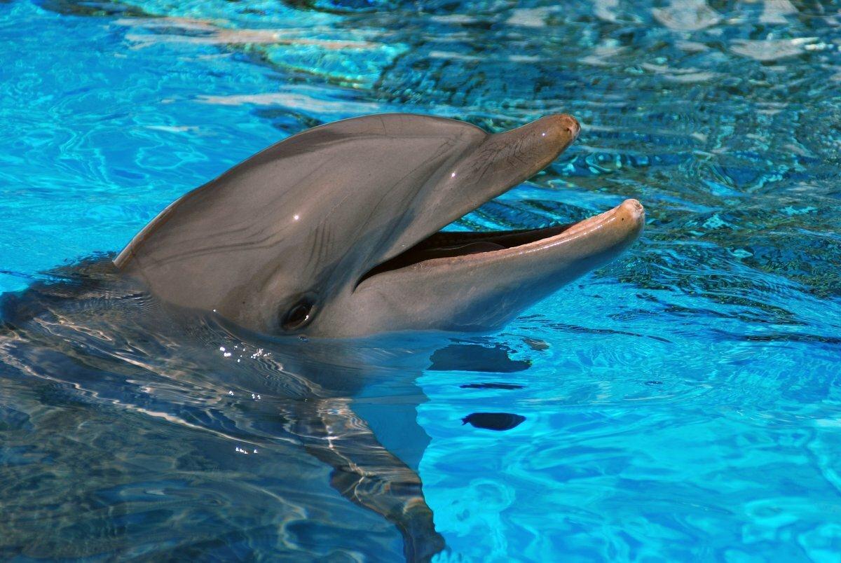 картинки картинки дельфинов сервис загрузки