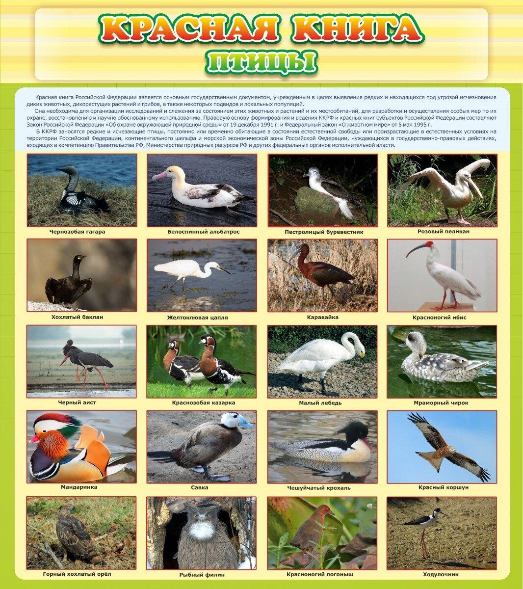 Птицы красной книги россии фото и названия