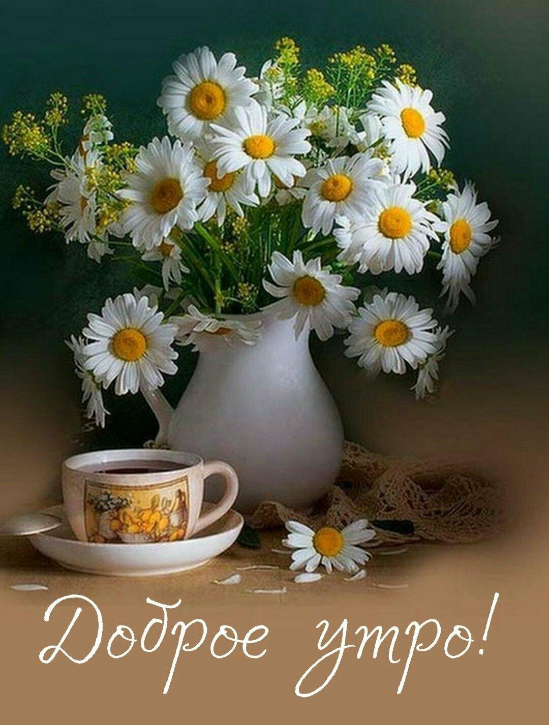 открытки с добрым утром с ромашками и хорошим настроением