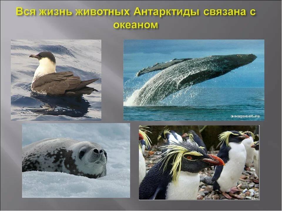 Где зимуют дикие животные картинки новой страны