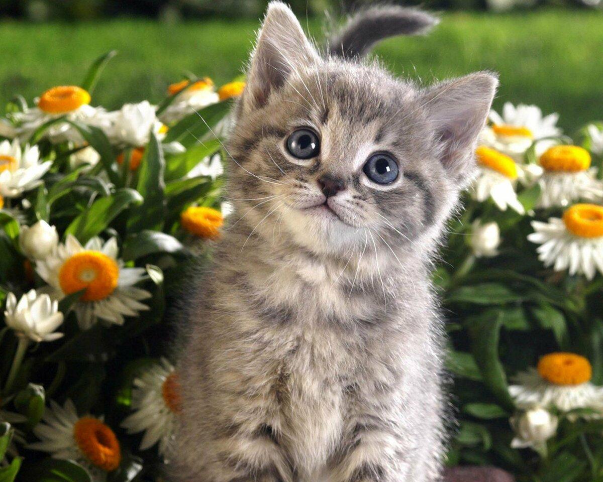 изделия красивые фото котят с ромашками представлена черно-белая серия