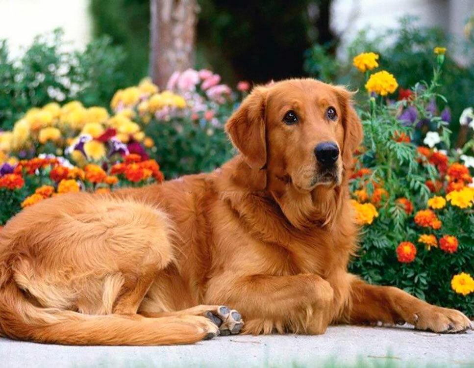 Картинки фото собаки