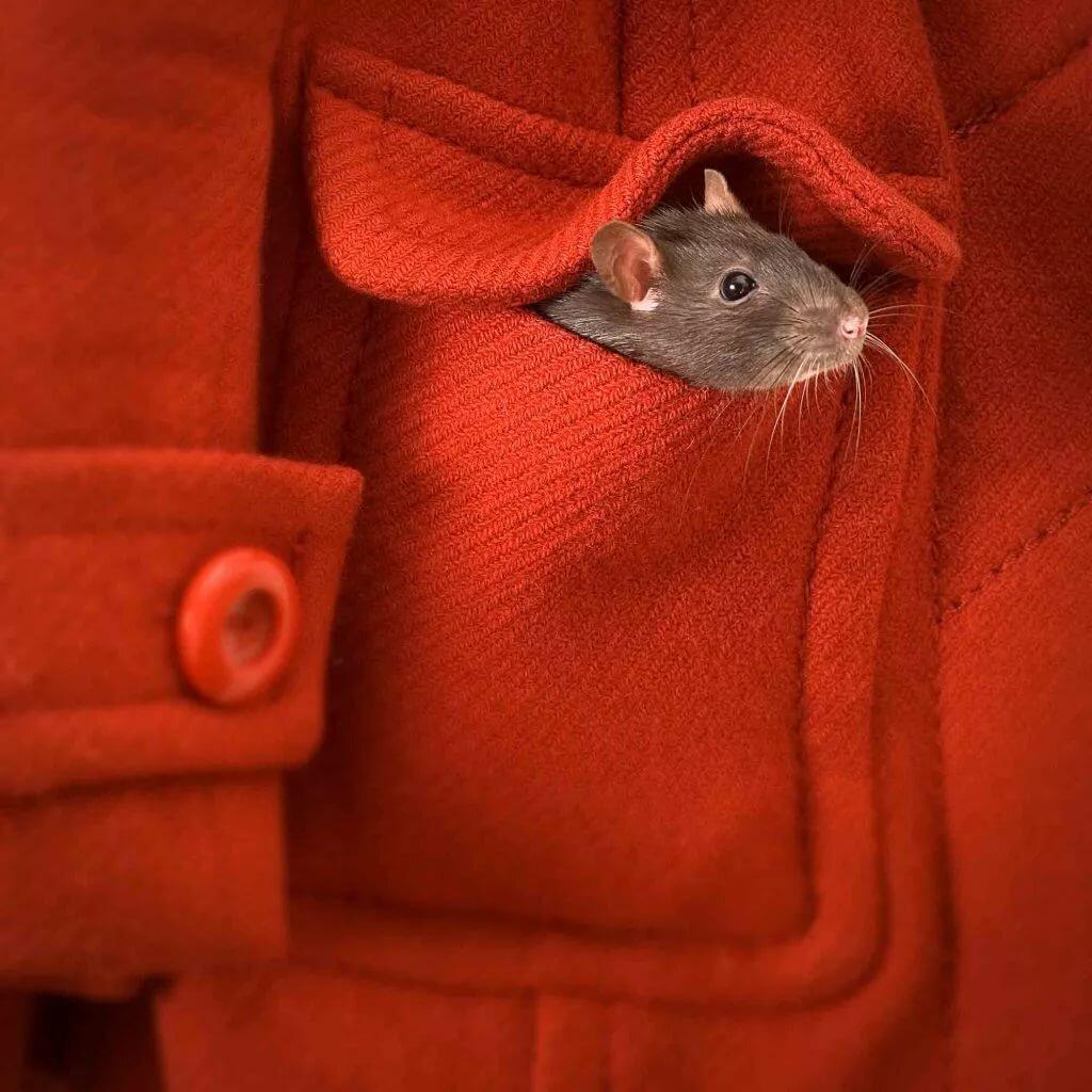 картинки с мышонком в пальто ситуация могла возникнуть