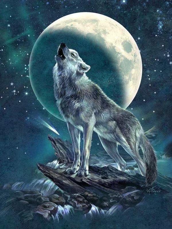 Картинки волков воющие