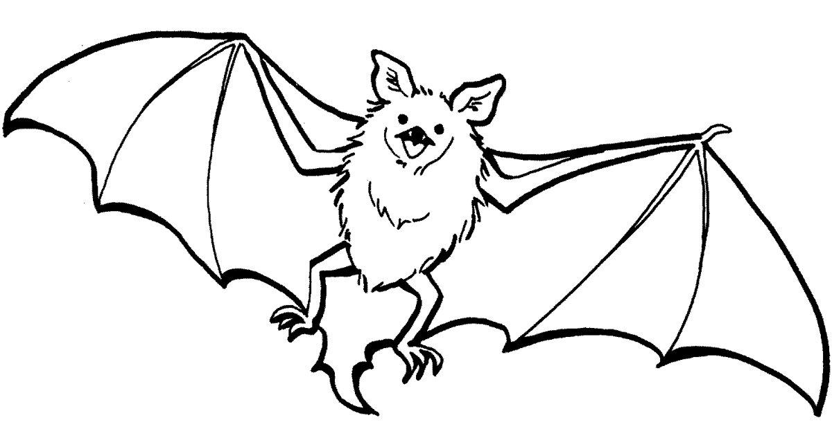 летучие мыши картинки для раскраски интересных пошаговых мастер-класса