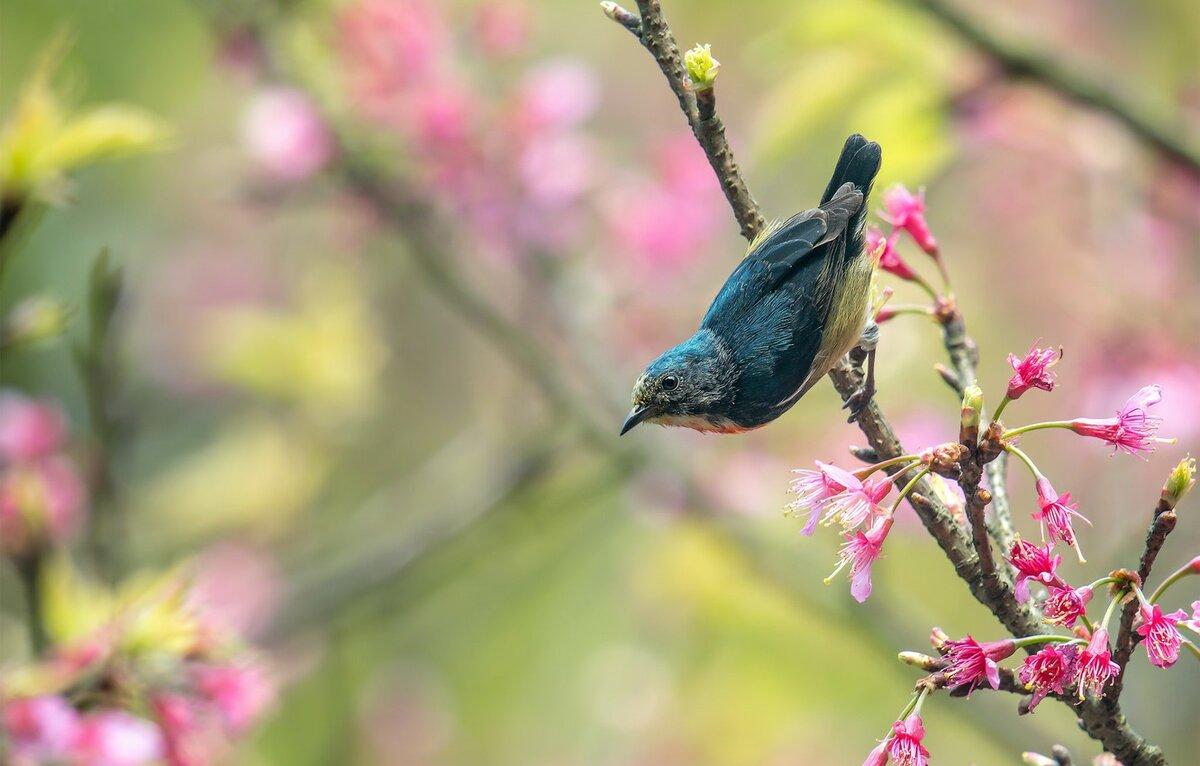 картинки птицы на ветвях подходящий