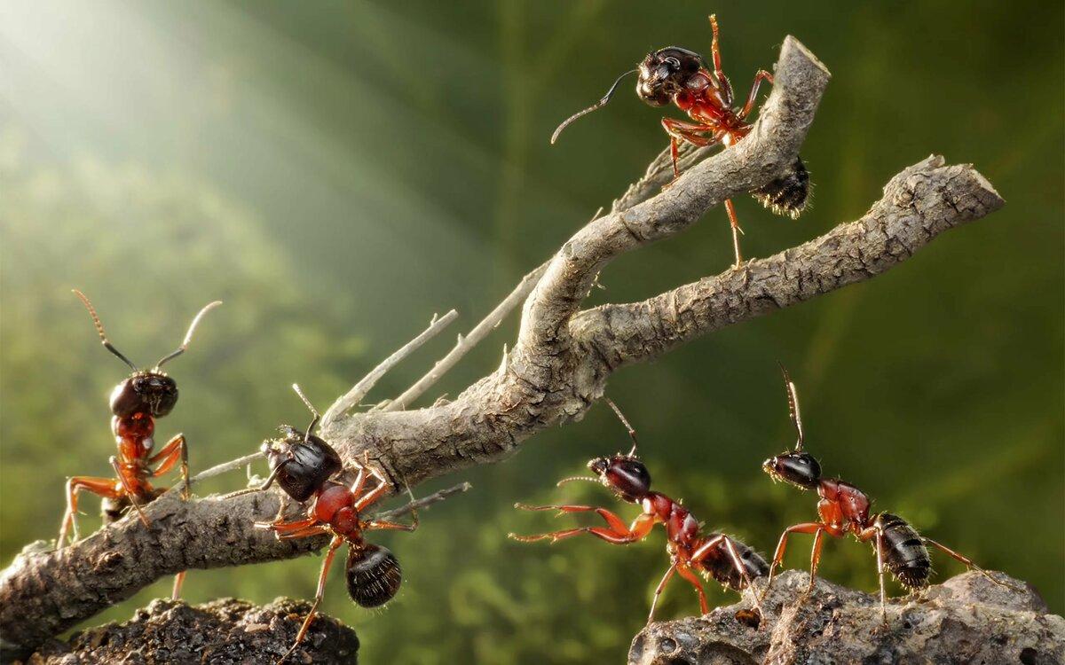 презентации семьи муравьев картинки лиц