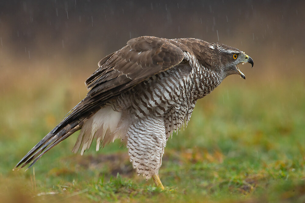 Хищные птицы тамбовской области фото с названиями