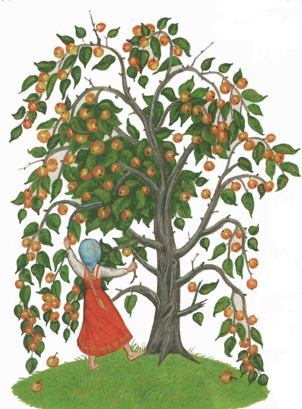 рисунок яблоньки из сказки гуси однотонное