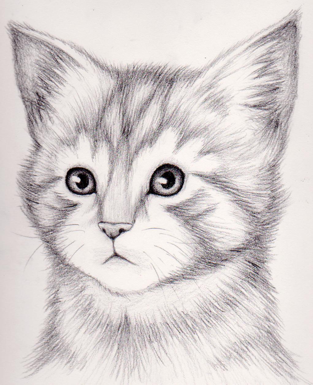 Простые картинки котят для срисовки