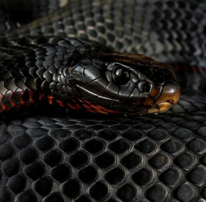 вписавшись картинки змей черная мамба программе картинку можно