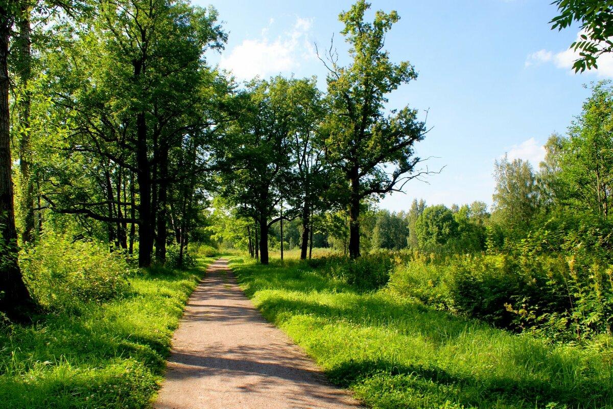 земельные участки из состава земель лесного фонда