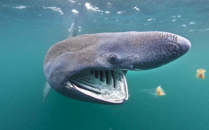 фото гигантских акул сделайте все задуманное