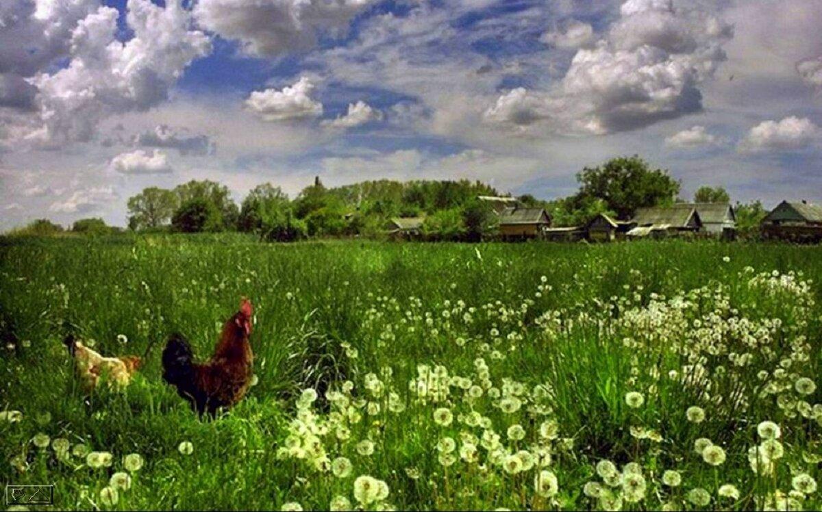 узнаете, картинка летнее утро в деревне как