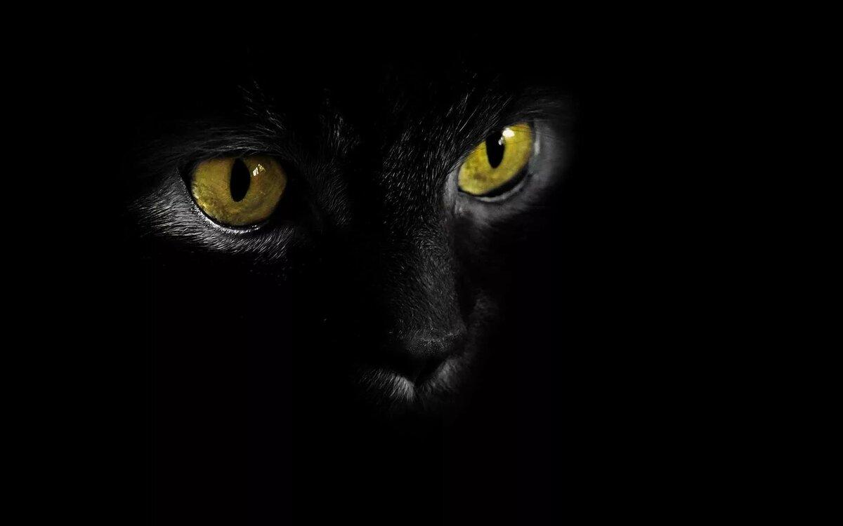 бывшая актриса, картинки с черными кошками на черном фоне даче