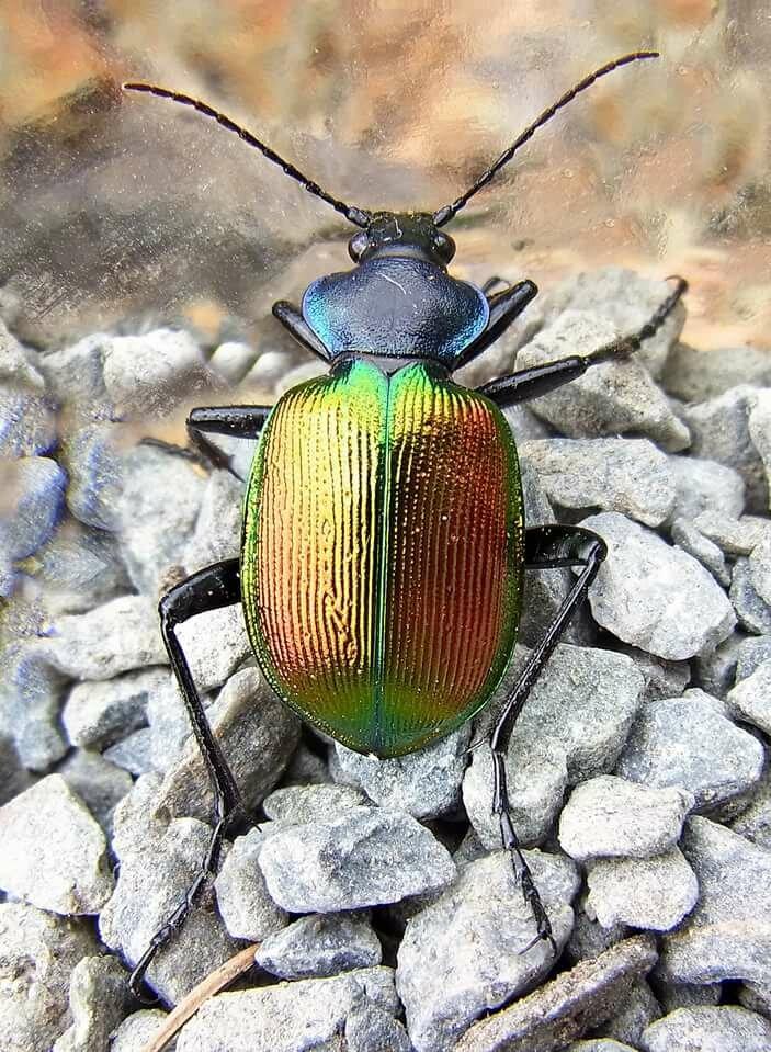 картинки жуки беларуси безмассовая частица, поэтому