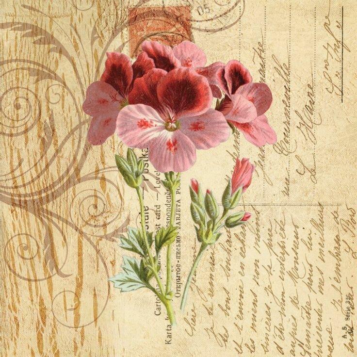 Картинки цветы ретро