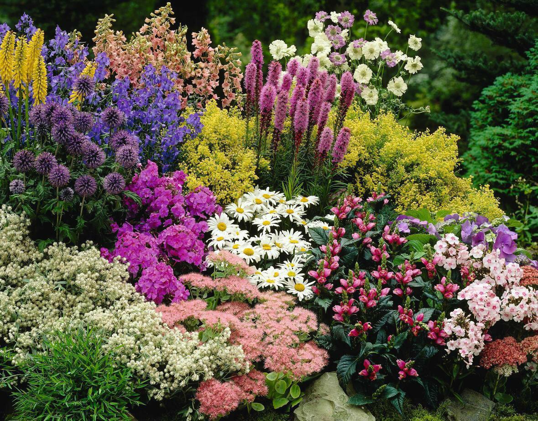 каталог всех многолетних цветов картинки