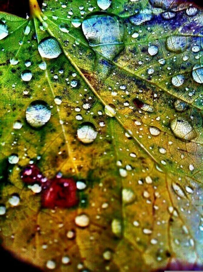 Картинки в капле дождя