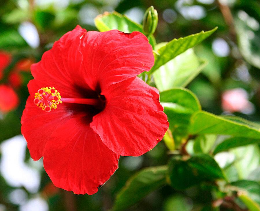своих китайский цветы названия фотографии заказов фотопечать онлайн