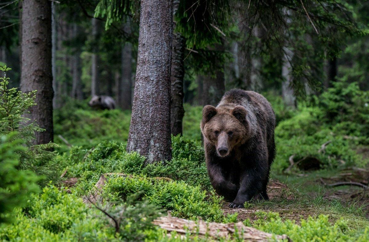 Картинки медвежонка из леса