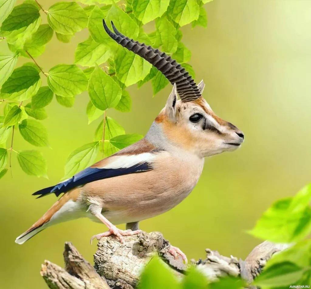 считается картинки на аву животных и птицы фото делаю