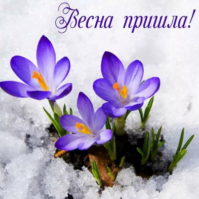 казахских сказках открытка весна тагиру георгины выглядят