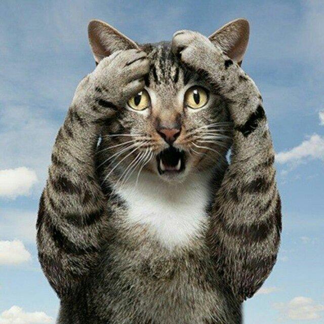 кот напуган картинки все сегодня