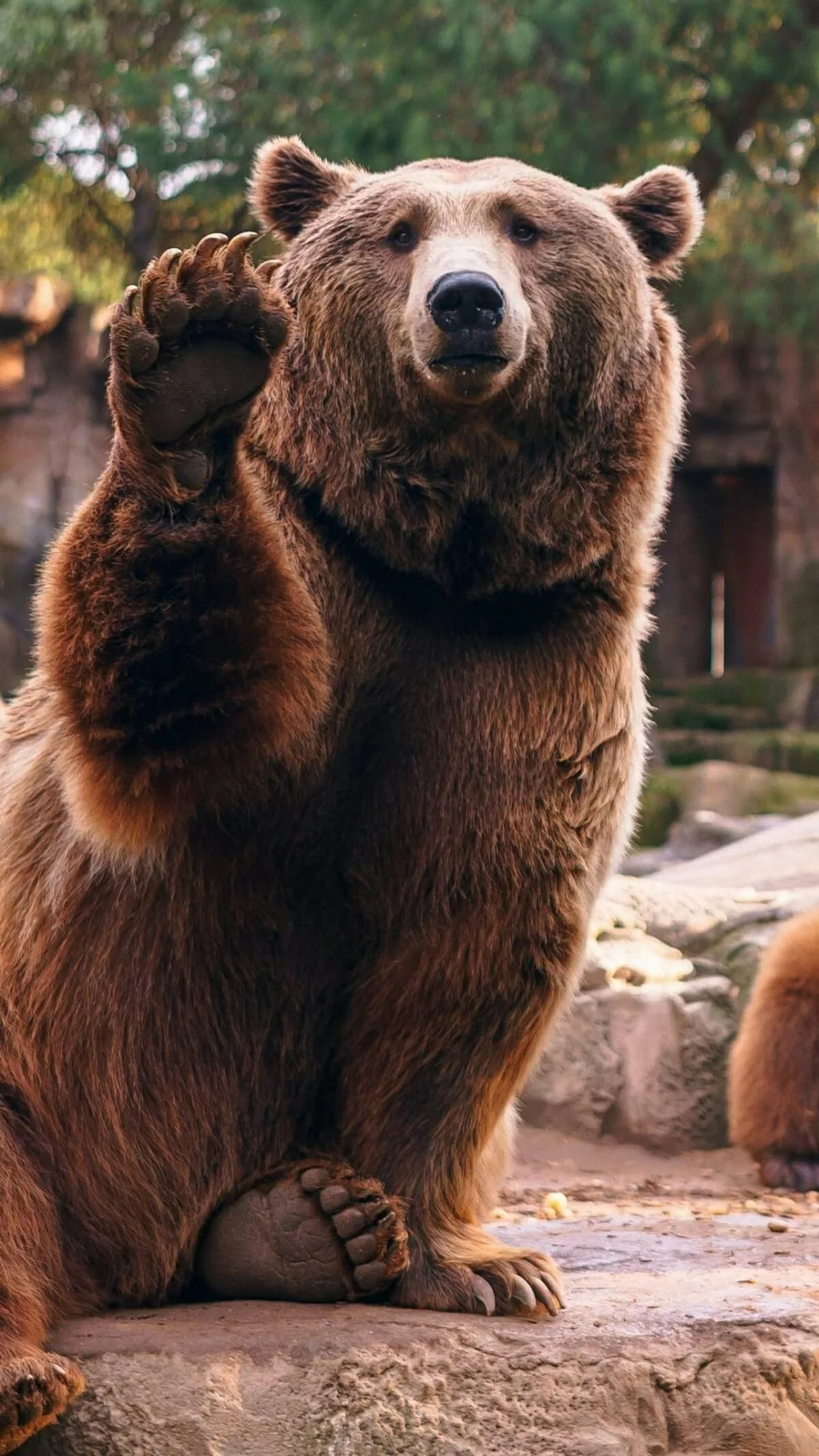 картинка медведь машет лапой рассказывал, что что