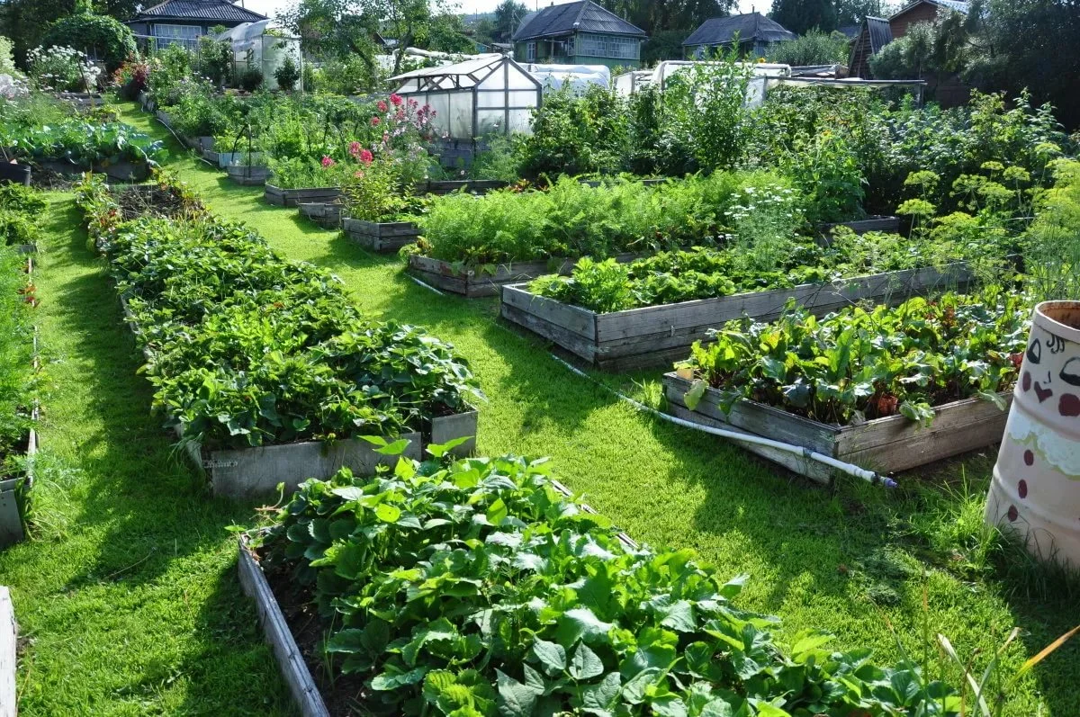 Сад для ленивых в картинках