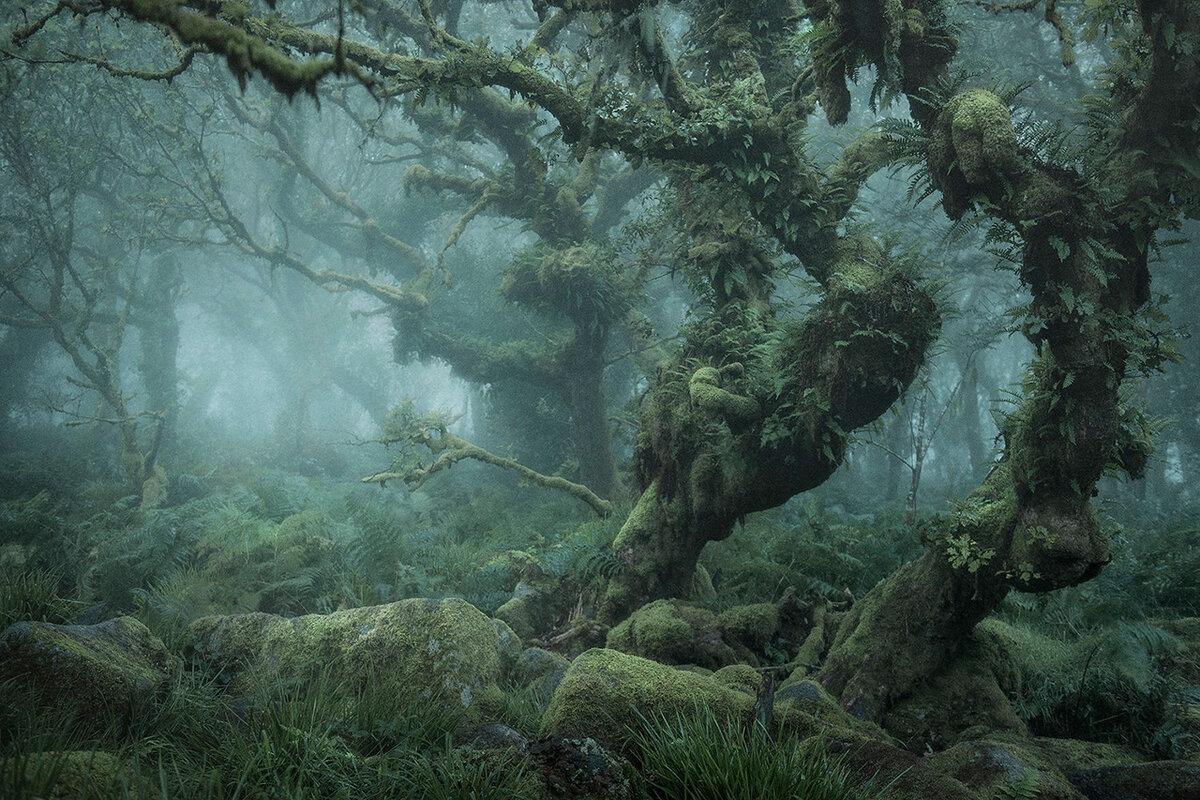 фото лес уистманс файлов иероглифы непонятные