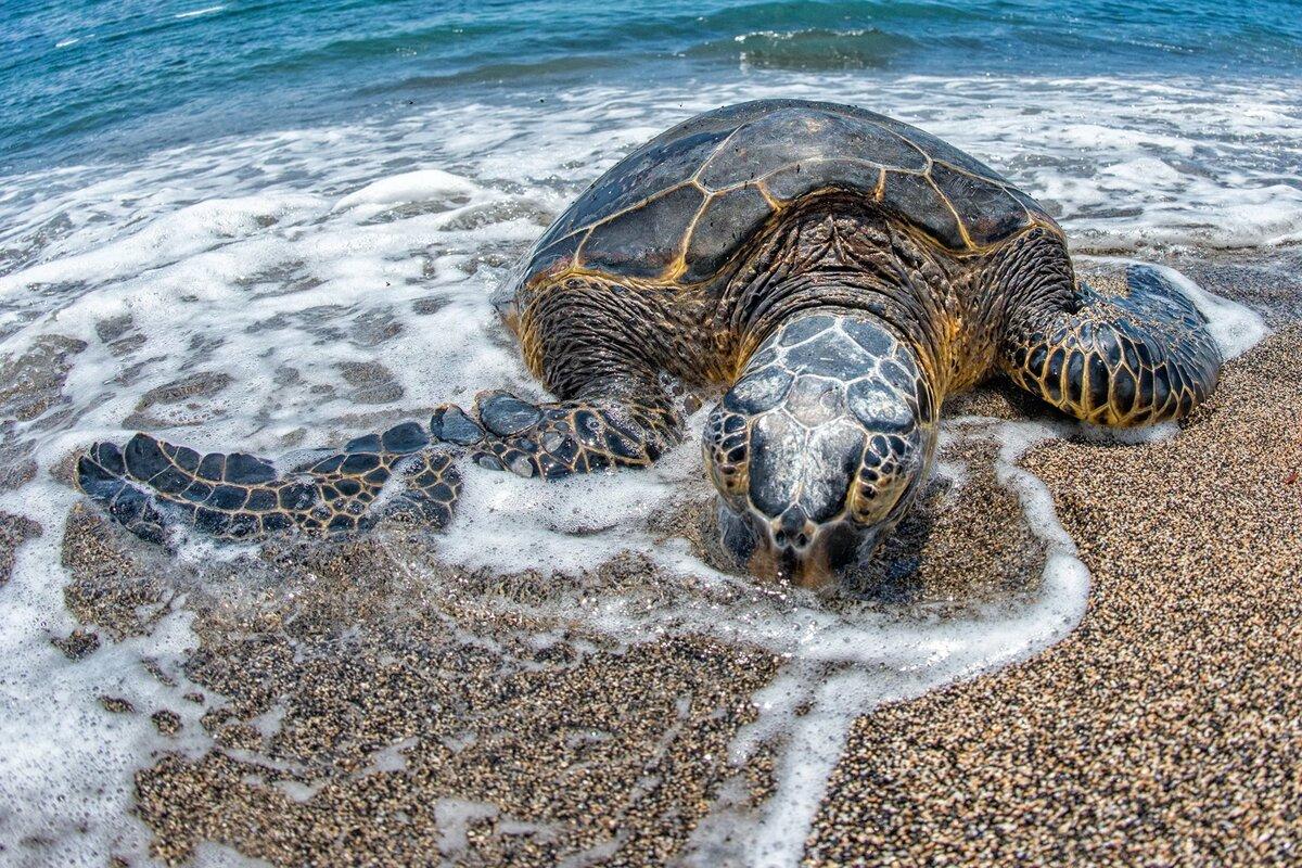 Альбатрос и черепаха картинки