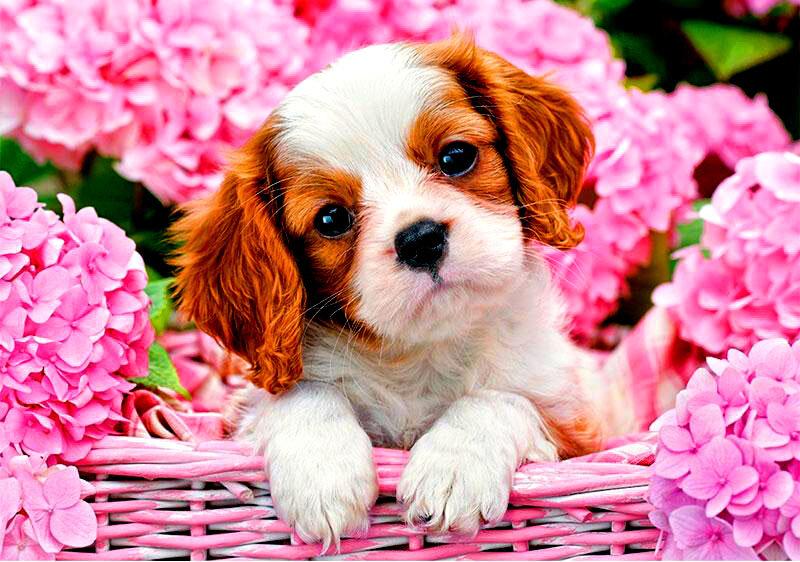 Открытка с изображением собачки