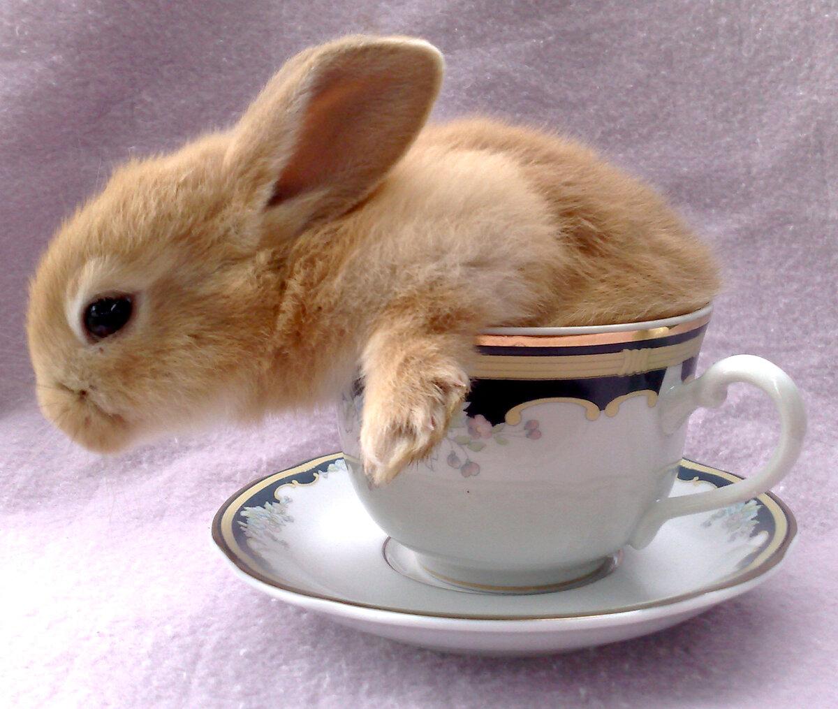 картинки чашки и кролика