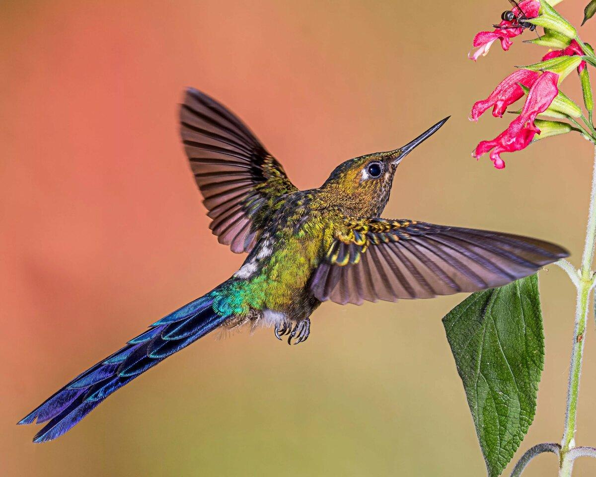 Животные картинка колибри карта поможет