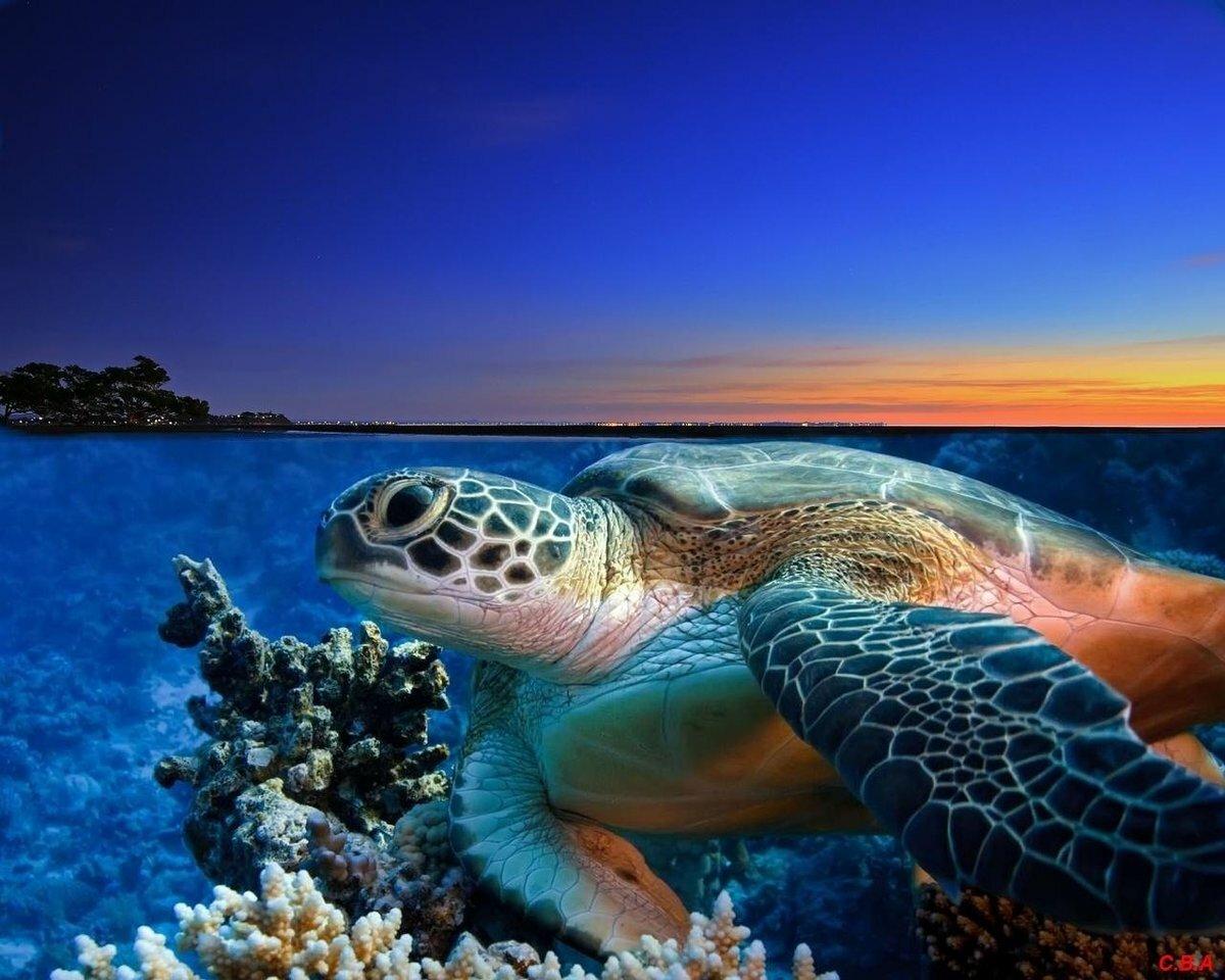 собирается картинки океан и его обитатели дополнительного размещения включает