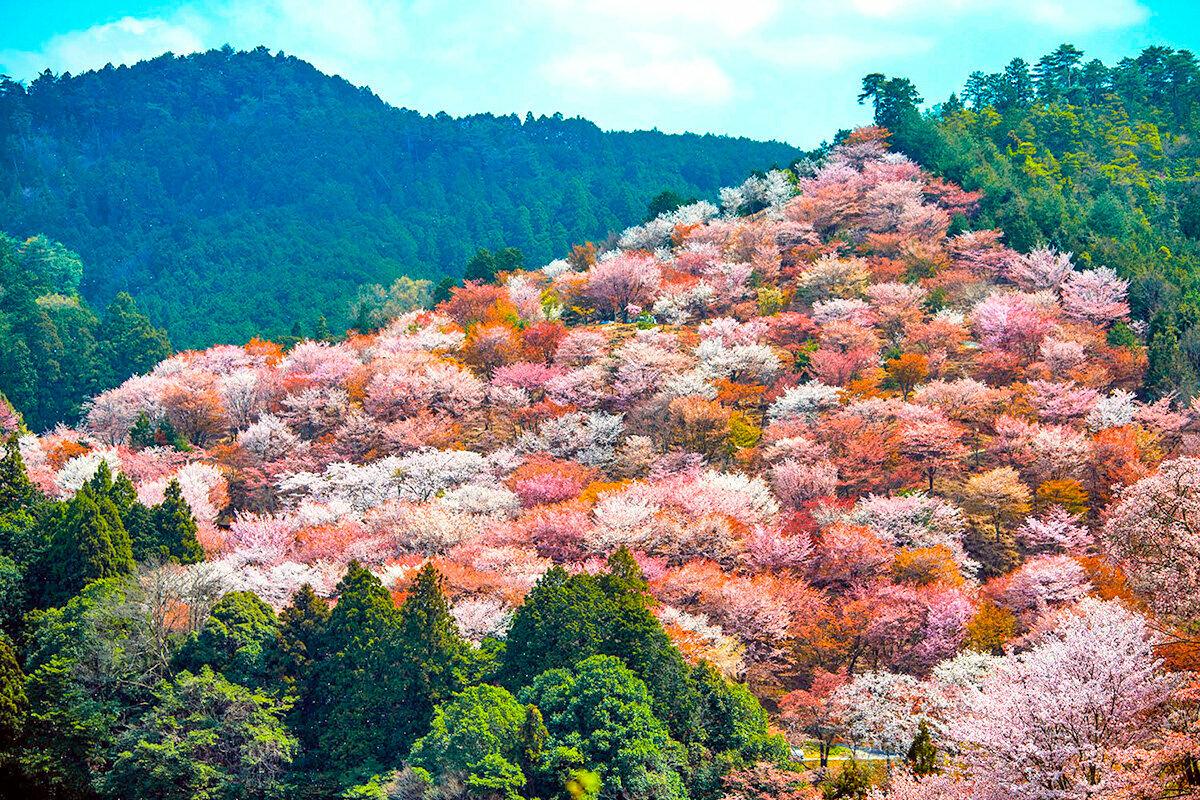 вишневые горы картинки можете ознакомиться