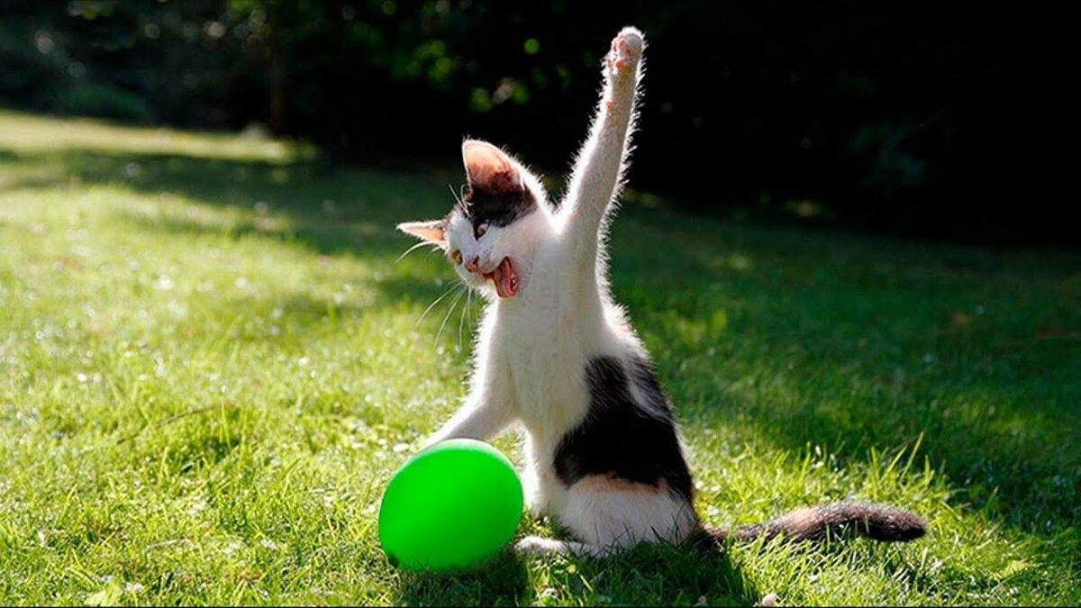 Смешные коты животных