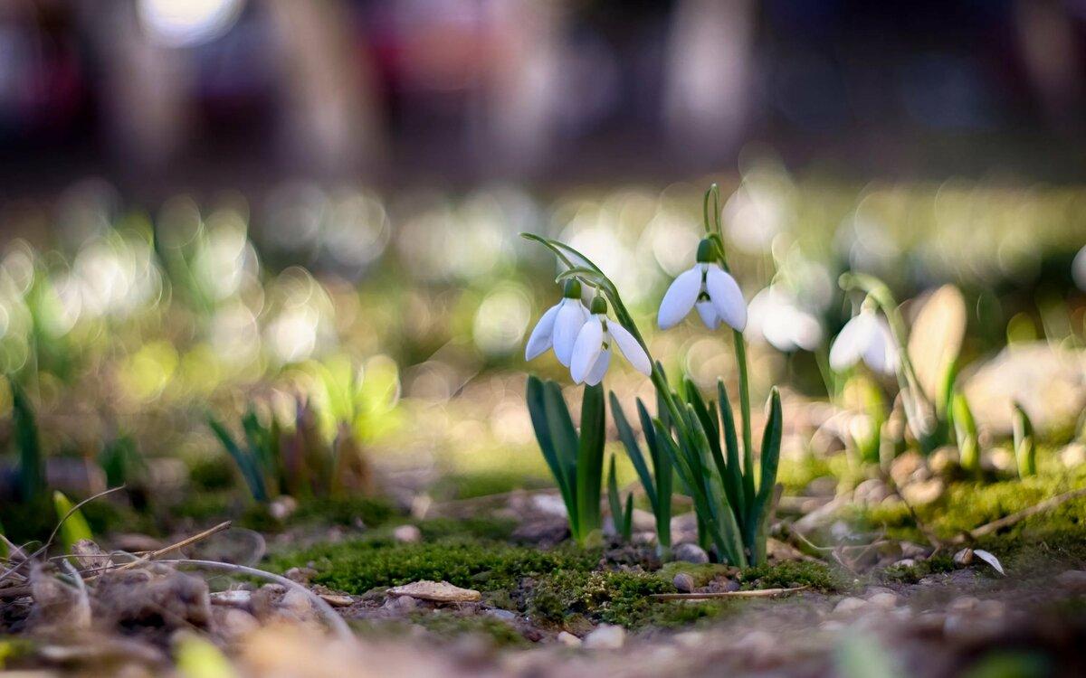 фото весны для сони здесь много, они